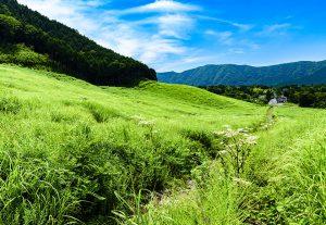 夏の仙石原すすき